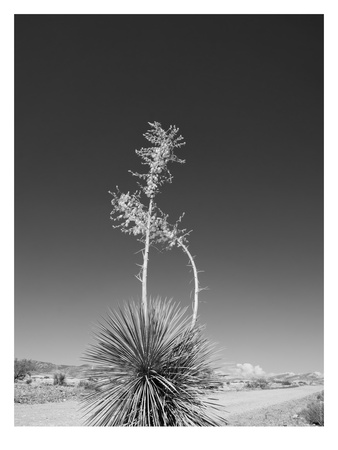 Road Trip 4 Prints by Murray Bolesta