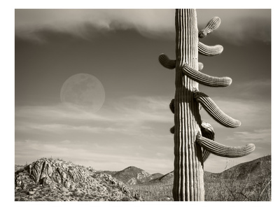 Desert Moon Posters by Murray Bolesta