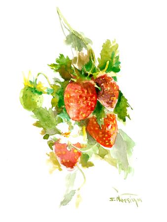 Strawberries 2 Poster by Suren Nersisyan