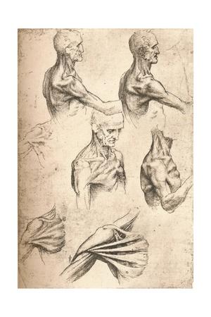 Anatomical Drawing, C1472-C1519 (1883) Giclee Print by  Leonardo da Vinci