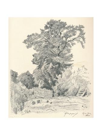 Study of Trees, C1839-1898, (1898) Giclee Print by Henri-Joseph Harpignies
