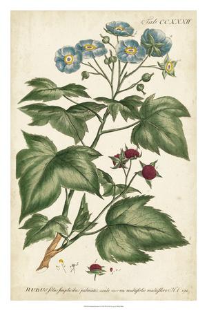 Chambray Botanical I Giclee Print by Phillip Miller