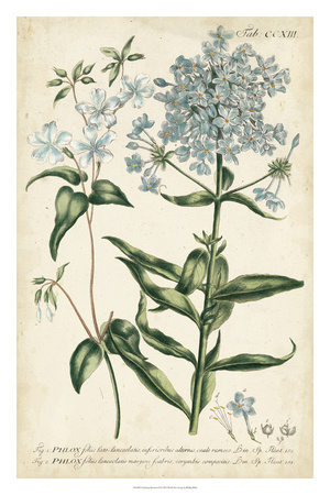 Chambray Botanical II Giclee Print by Phillip Miller