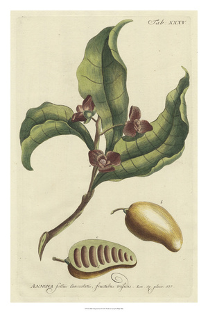 Miller Foliage & Fruit II Giclee Print by Phillip Miller