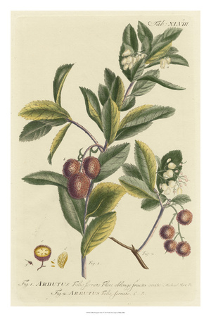 Miller Foliage & Fruit I Giclee Print by Phillip Miller