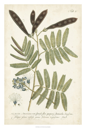 Miller Ferns I Giclee Print by Phillip Miller