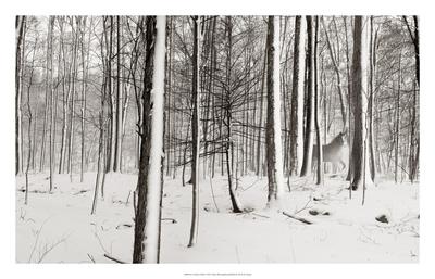 A Snowy Walk I Art by James McLoughlin