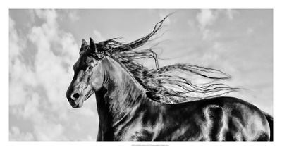 Wind Blown Mane IV Prints by  PHBurchett