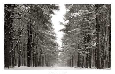 A Snowy Walk IV Poster by James McLoughlin