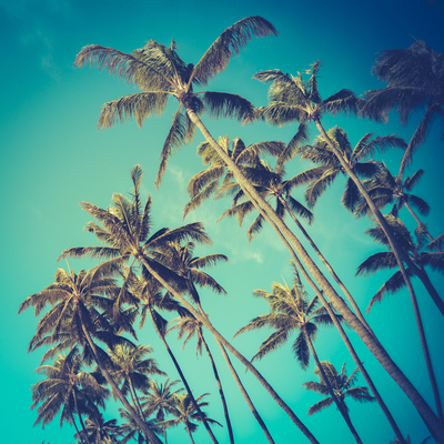 Retro Diagonal Palm Trees in Hawaii Photographic Print by Mr Doomits