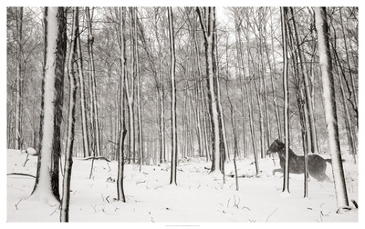 A Snowy Walk II Posters by James McLoughlin