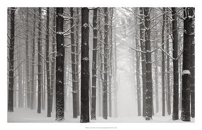 A Snowy Walk V Prints by James McLoughlin