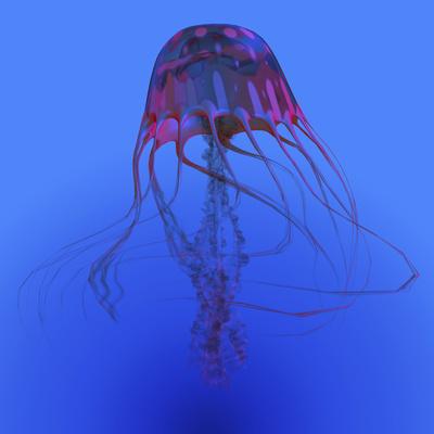 Red Jellyfish Illustration Poster by  Stocktrek Images