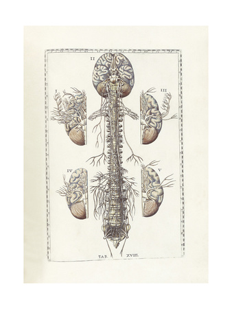 The Science of Human Anatomy by Bartholomeo Eustachi Prints by  Stocktrek Images