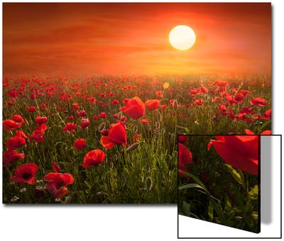 Poppies UMĚNÍ NA AKRYLU
