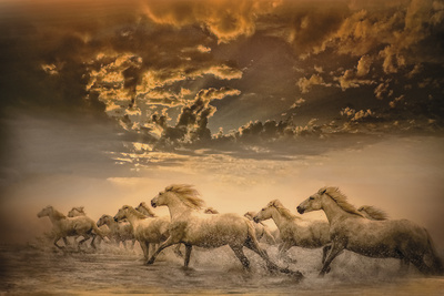 Flying Manes Giclee Print by Bobbie Goodrich