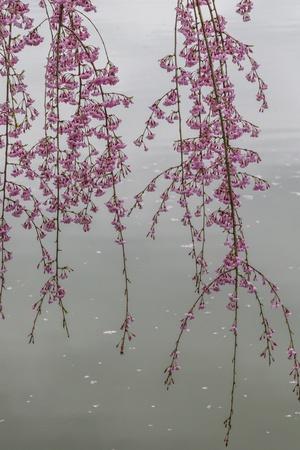 Kyoto Japan 3 Lámina fotográfica por Art Wolfe