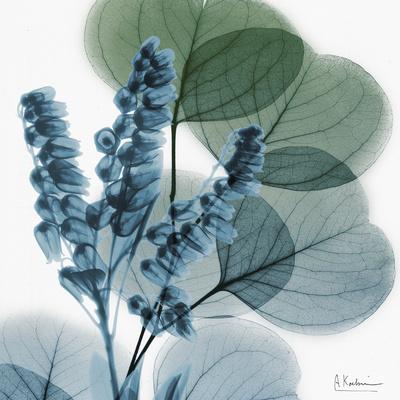 Lilly of Eucalyptus Speciální digitálně vytištěná reprodukce