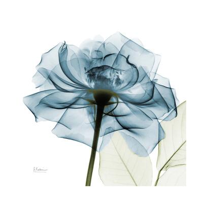 Teal Rose Giclee-tryk i høj kvalitet