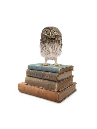 Owl and Books Giclee Print by  J Hovenstine Studios