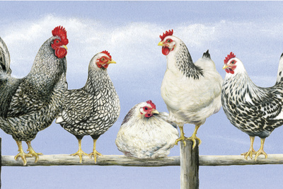 Black and White Hens 1 Giclée-tryk af Janet Pidoux