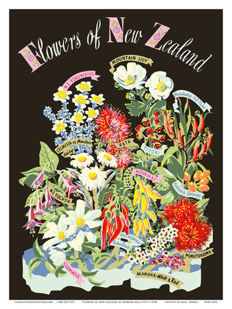 Flowers of New Zealand Prints by Howard Mallitte