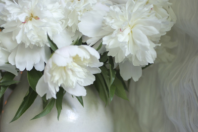 Peony Photographic Print by Anna Miller