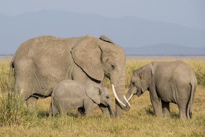 Kenya, Amboseli National Park, Elephant (Loxodanta Africana) Photo by Alison Jones