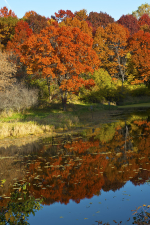 USA, Minnesota, Sunfish Lake, Fall Color Reflected in Pond Photographic Print by Bernard Friel