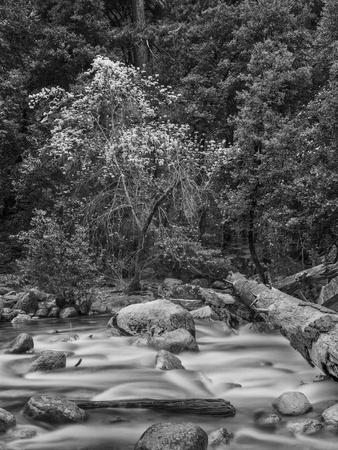 USA, California, Yosemite, Happy Isles Photographic Print by John Ford