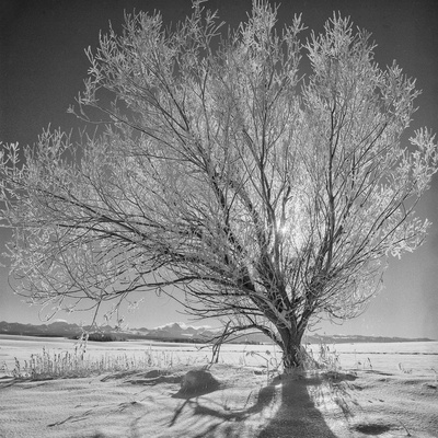 USA, Wyoming, Grand Teton National Park, Ice Tree Photographic Print by John Ford