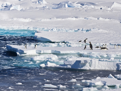 Antarctica. Emperor and Adelie Penguins on the Edge of an Ice Shelf Foto af Janet Muir