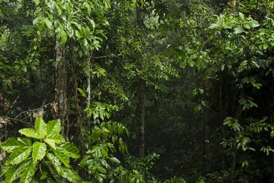 Rainforest Rain Storm, Yasuni NP, Amazon Rainforest Ecuador Foto von Pete Oxford