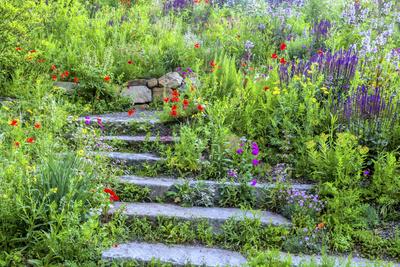 USA, Wayne, Pennsylvania. Summer Flowers in Chanticleer Garden Photo by Jay O'brien