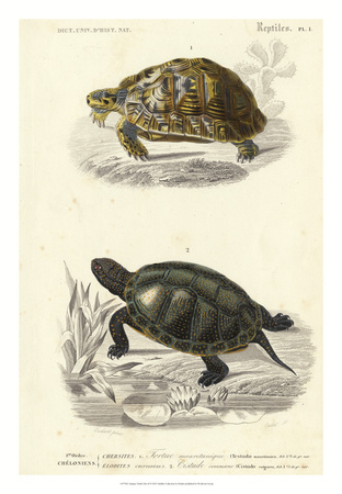 Antique Turtle Duo II Giclee Print by  Oudart