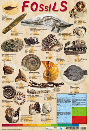 Fossils Prints