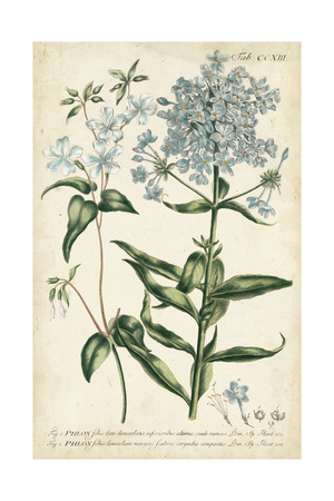 Chambray Botanical II Prints by Phillip Miller