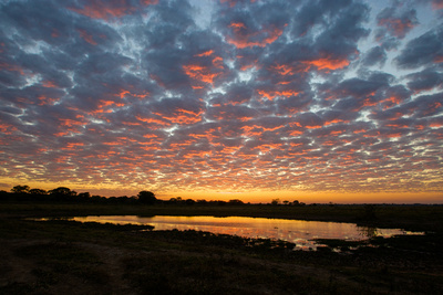 Sunrise over the Brazilian Pantanal Photographic Print by Steve Winter