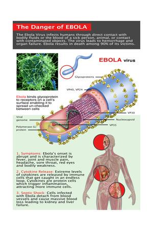 The Danger of Ebola, Illustration Art by Gwen Shockey
