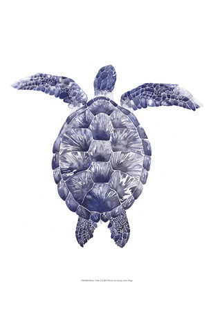 Marine Turtle I Prints by Grace Popp