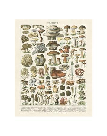 Champignons II Poster von Adolphe Millot
