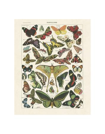 Papillons 1 Poster von Adolphe Millot