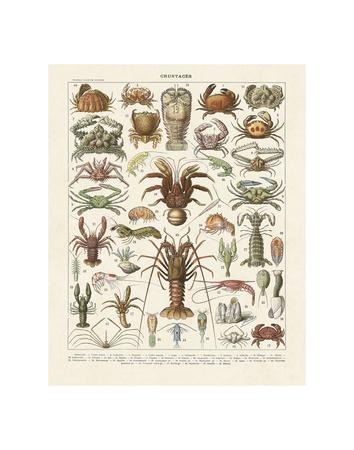 Crustaces Kunstdrucke von Adolphe Millot