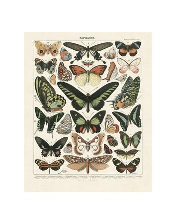Papillons III Kunstdrucke von Adolphe Millot