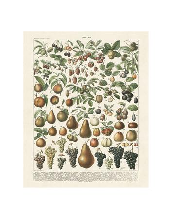 Fruits II Poster von Adolphe Millot