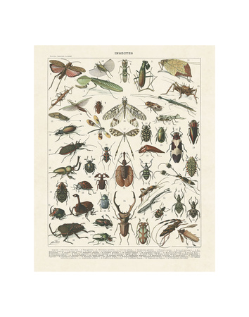 Insectes II Poster von Adolphe Millot