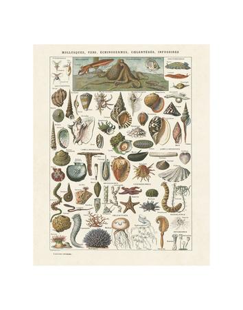 Mollosques I Kunstdruck von Adolphe Millot