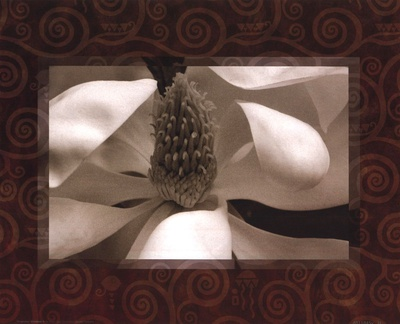 Magnolia Window II Prints by Tony Stuart