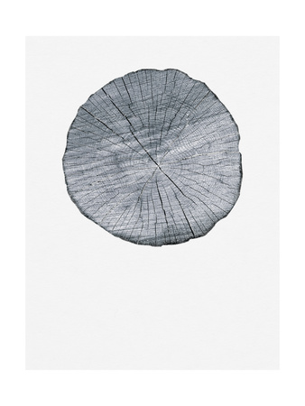 Old Growth Ring Print Poster by Sam Appleman