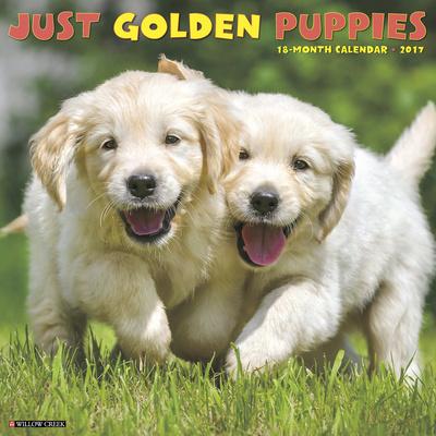 Just Golden Puppies - 2017 Calendar Calendars